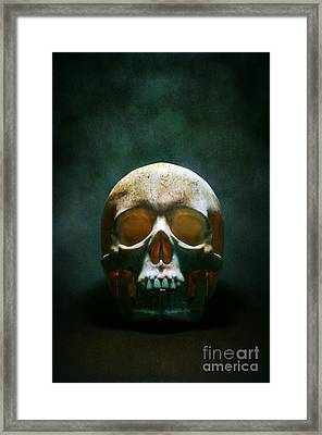 Human Skull Framed Print by Carlos Caetano