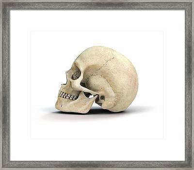 Human Skull Framed Print by Mikkel Juul Jensen
