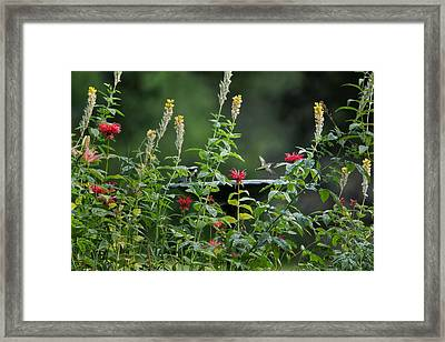 Humming Bird Framed Print by Bill Wakeley