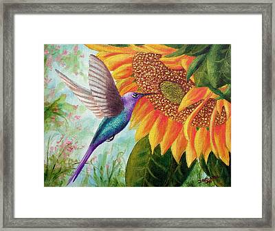Humming For Nectar Framed Print by David G Paul
