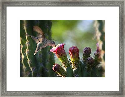 Hummingbird Breakfast Southwest Style  Framed Print by Saija  Lehtonen