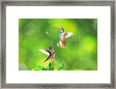 Hummingbird Dance  Framed Print by Lynn Bauer
