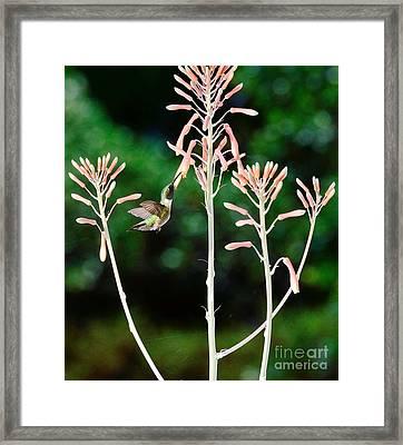 Hummingbird Emerald Green - Hummer Floats In Floral Glory Framed Print by Wayne Nielsen