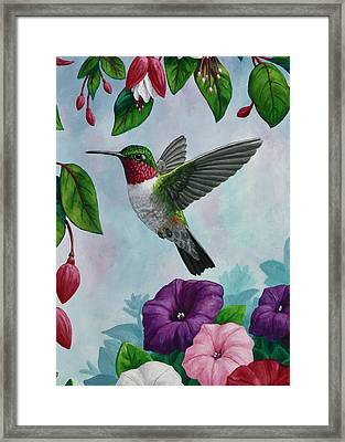 Hummingbird Greeting Card 1 Framed Print by Crista Forest