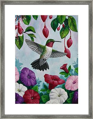 Hummingbird Greeting Card 2 Framed Print by Crista Forest