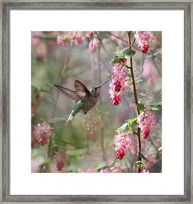 Hummingbird Heaven Framed Print by Angie Vogel