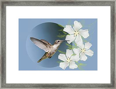 Hummingbird Heaven Framed Print by Bonnie Barry