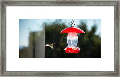 Hummingbird Hovering At Bird Feeder Framed Print by Panoramic Images