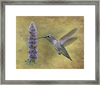 Hummingbird In The Mint Framed Print by Angie Vogel
