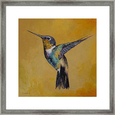 Hummingbird Framed Print by Michael Creese