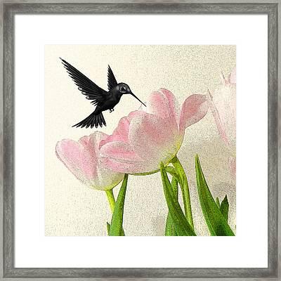 Hummingbird Framed Print by Sharon Lisa Clarke