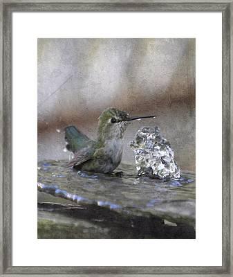 Hummingbird Spa Framed Print by Angie Vogel