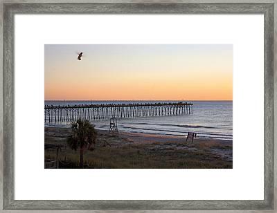 Hummingbird Sunrise Framed Print by Betsy Knapp