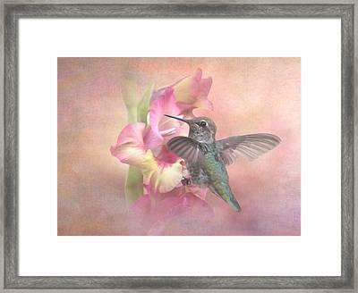 Hummingbirds Gladiola Framed Print by Angie Vogel