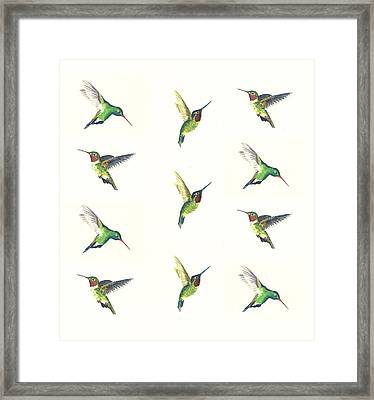 Hummingbirds Number 2 Framed Print by Michael Vigliotti