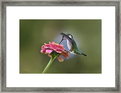 Hummingbirds Pure Goodness Framed Print by Christina Rollo