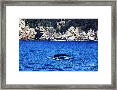 Humpback Whale Alaska Framed Print by Thomas R Fletcher