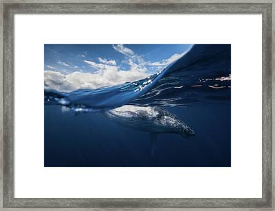Humpback Whale And The Sky Framed Print by Barathieu Gabriel