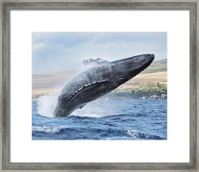 Humpback Whale Framed Print by M Swiet Productions
