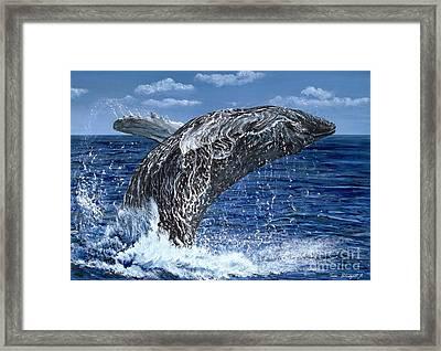 Humpback Whale Framed Print by Tom Blodgett Jr