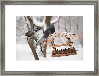 Eat Free Framed Print featuring the photograph Two Hungry Pigeons Sitting On Bird Feeder  by Arletta Cwalina