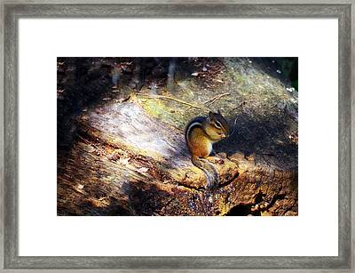 Hungry Framed Print by Mark Papke