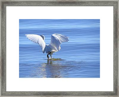 Hunting Dance Framed Print by Phyllis Beiser