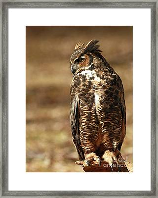 Hunting Solo - Great Horned Owl Framed Print by Inspired Nature Photography Fine Art Photography