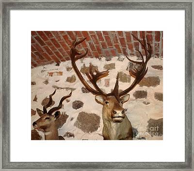 Hunting Trophys Framed Print by Rudi Prott