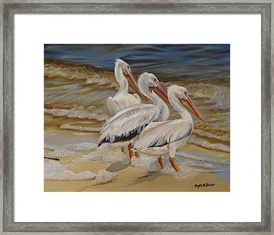 Hurricane Issac Pelicans Framed Print by Phyllis Beiser