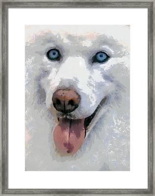 Husky Framed Print by Georgi Dimitrov