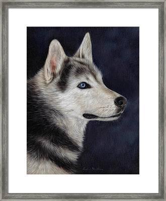 Husky Portrait Painting Framed Print by Rachel Stribbling