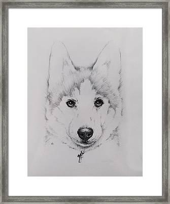 Husky Framed Print by Rachel Christine Nowicki