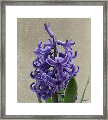 Hyacinth Purple Framed Print by Jeff Kolker