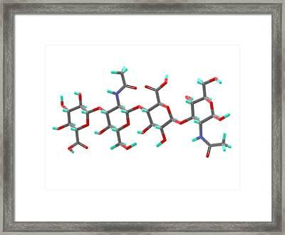 Hyaluronic Acid Molecule Framed Print by Alfred Pasieka