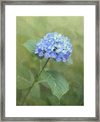 Hydrangea Blues Framed Print by Angie Vogel