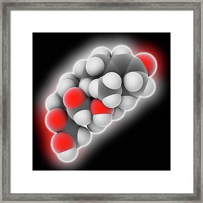 Hydrocortisone Hormone Molecule Framed Print by Laguna Design