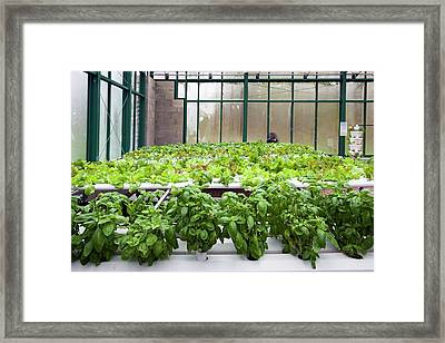 Hydroponic Greenhouse Framed Print by Jim West