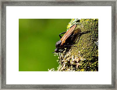 Hymenoptera Framed Print by Toppart Sweden