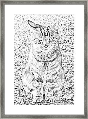 Hypnotic Kitty Framed Print by J D Owen