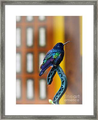 I Am Just Short For My Weight Framed Print by Al Bourassa