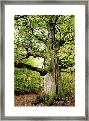 I Am Nearly 1000 Years Old Framed Print by Heiko Koehrer-Wagner