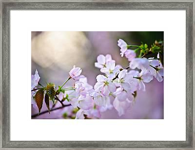 I Am Renewed  Framed Print by Jamie Starling