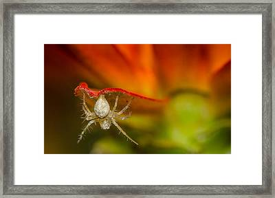 I Am Spiderman Framed Print by Tin Lung Chao