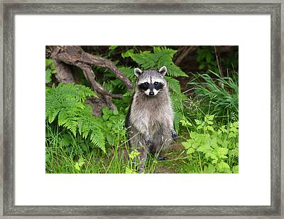 I Am Standing Up Straight Framed Print by Kym Backland