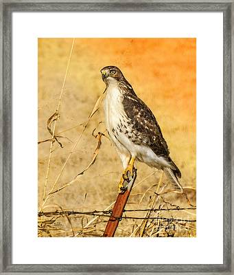 I Can See Clearly Framed Print by Betty LaRue