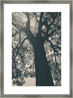 I Can't Describe Framed Print by Laurie Search