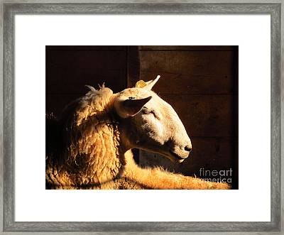 I Don't Have To Listen To This Framed Print by Tina M Wenger