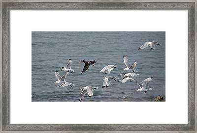 I Don't Think They'll Notice Me Framed Print by Jim Cook