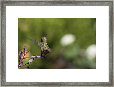 I Got It Framed Print by Mike Herdering